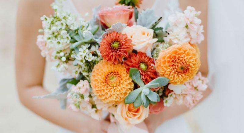 گل های داوودی