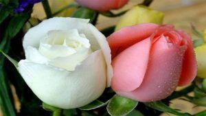 گل های زیبای جهان