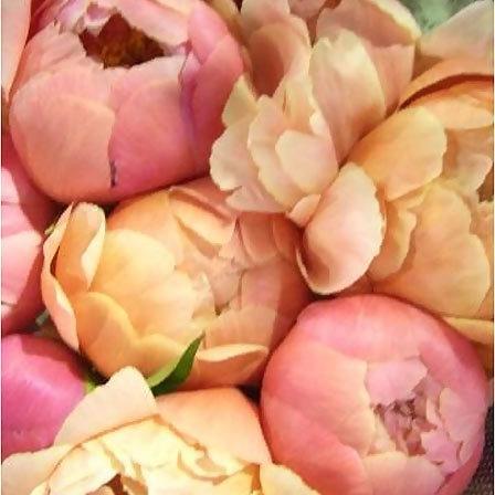 گل های صدتومانی