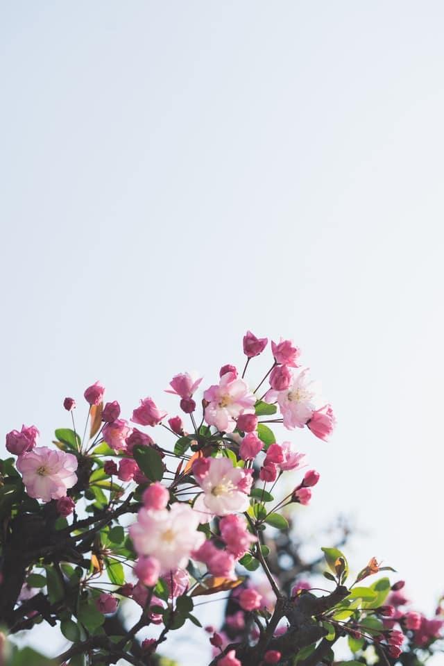 پروفایل تولدم مبارک با عکس زیباترین گل ها